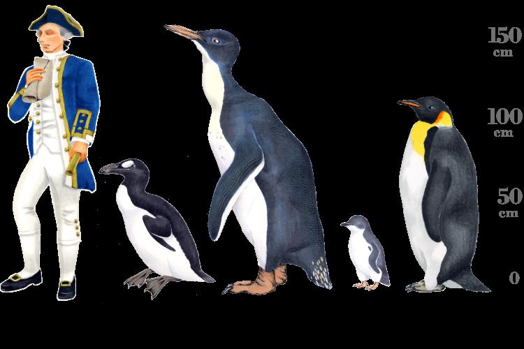 ペンギンの画像 p1_28