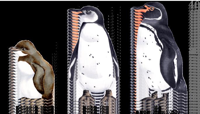 ペンギンの画像 p1_18