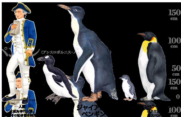 ペンギンの画像 p1_27